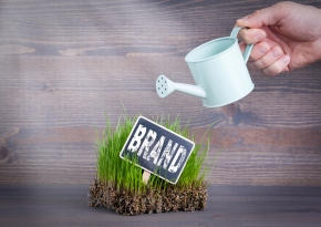 Brand concept. Fresh and green grass on wood background