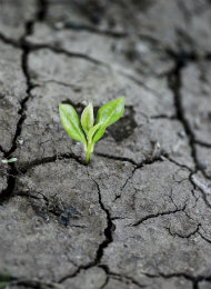 How to build resilience for yourcareer